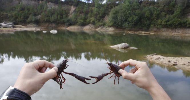 cangrexos